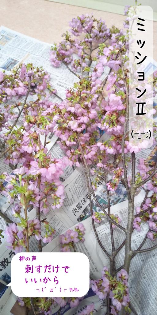 ミッション桜
