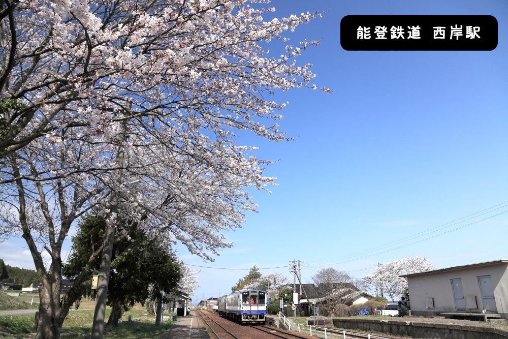 能登鉄道西岸駅桜