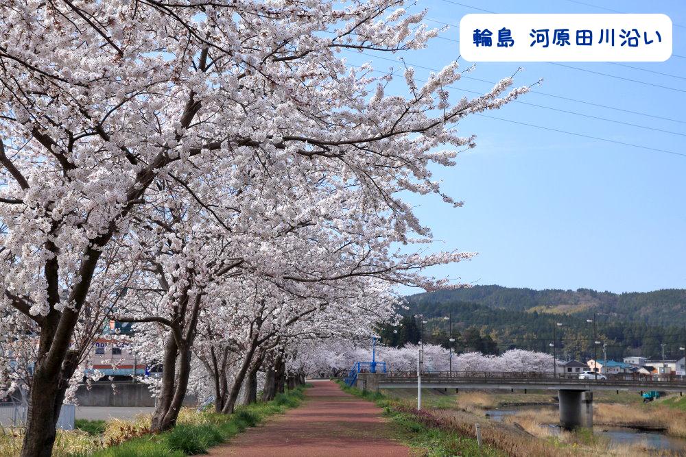 輪島河原田川桜